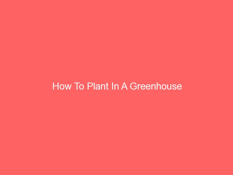How To Plant In A Greenhouse