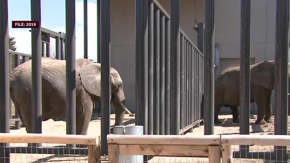 Man cited for getting too close to Wisconsin zoo's elephant exhibit