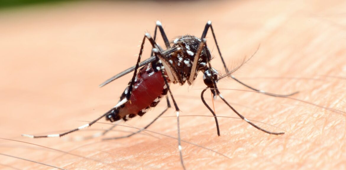 West Nile Virus Detected in Oklahoma County Mosquitoes